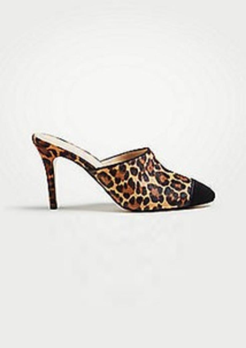 d97ad4528d1 Ann Taylor Caia Leopard Print Haircalf Cap Toe Pumps