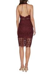 Bardot Bardot Gemma Halter Lace Sheath Dress Dresses