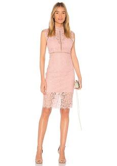 Bardot Lace Panel Dress in Pink. - size Aus 10 / US S (also in Aus 12 / US M,Aus 14 / US L,Aus 8 / US XS)