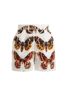 Dolce & Gabbana Butterfly-print cotton-poplin shorts