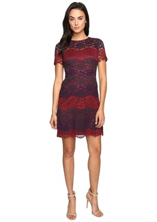 Maggy London Tri-Color Lace Fit and Flare