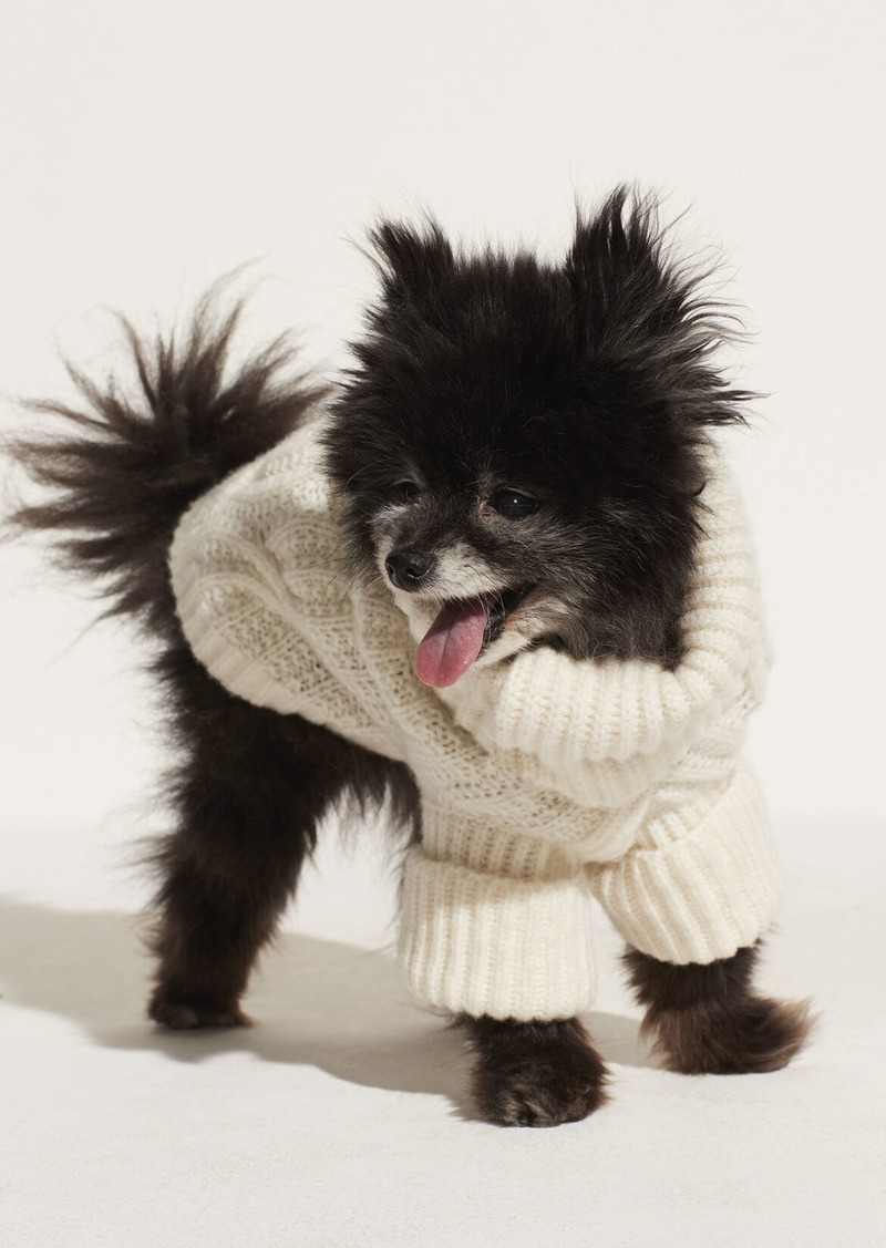 Vince Cable Knit Dog Sweater