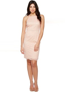 Vince Camuto Lace Bodycon Dress with Trim