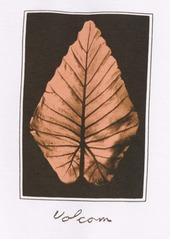 Volcom Frond Short Sleeve Graphic Tee (Big Boy)