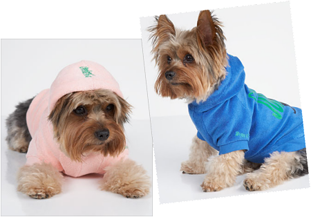 Deal of the Day: Deck Out Your Dog in Juicy Couture